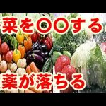 【衝撃】意外と知られていない野菜の正しい洗い方!農薬や虫だらけ!今すぐ実践!