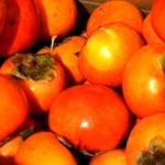 【生活の知恵・裏技】超おいしい柿ジュースの作り方 柿がたくさんある人必見! スムージー ではありません。
