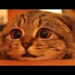 猫 かわいい – 猫 おもしろ – 最も面白い猫の動画 2017 #18