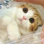 猫 かわいい – 猫 おもしろ – 最も面白い猫の動画 2017 #2
