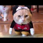 猫 かわいい – 猫 おもしろ – 最も面白い猫の動画 2017 #23