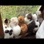 猫 かわいい – 猫 おもしろ – 最も面白い猫の動画 2017 #29