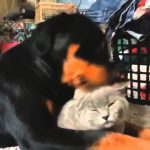 #58 ChooDuck Lustige Videos Лучшие приколы 2015 Funny compilation 楽しい 面白い動画    不覚にも笑ってしまった面白い動画