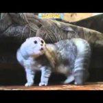 面白い動画 – 面白い 映像 – 面白い動画 日本- 面白い 映像 日本 – 面白い 映像 アニメ
