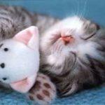 猫 かわいい – 猫 おもしろ – 最も面白い猫の動画 #66