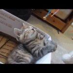 【爆笑動画】Twitterで話題な面白い動物たち!
