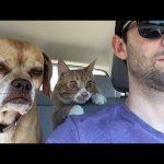 笑える!面白い犬たちの写真集(画像100選)