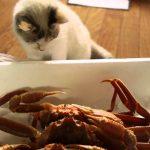 面白い 映像 日本、面白い 動物 。猫 おもしろ動画 :ねこVSかに。 ♨™
