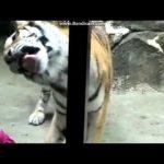 【面白い動画】動物園のおもしろ動画まとめ