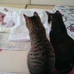 「かわいい猫」初めて人間の赤ちゃんに会った猫の反応が超面白い