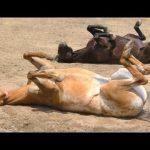 面白い馬 – 面白い馬動画。コンピレーション