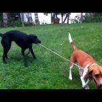 【面白い犬動画】笑わせてくれるかわいい犬たち