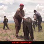 世界のおもしろ動画 TOP VIDEOS ハプニング映像集 VIDEOSPION №92 【面白い動画 動画】