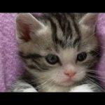 猫 かわいい – 猫 おもしろ – 最も面白い猫の動画 2017 #16