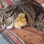 かわいい猫   猫おもしろ   最も面白い猫の動画 2017 #40