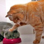 猫 かわいい – 猫 おもしろ – 最も面白い猫の動画 #57