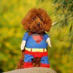 【犬おもしろ】おもしろいけど可愛い犬の動画集! ~海外のおもしろ犬~