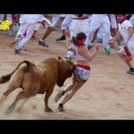 【動物】面白い動画|面白い動物||おかしい狂った牛が失敗します最も素晴らしい闘牛祭り