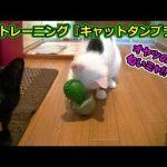 個性的な猫が3匹集えば文殊の知恵になるのか!?(面白い&可愛い猫)