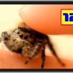 世界のおもしろ動画 ハプニング映像集 VIDEOSPION №121【面白い動画 動画】
