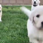 「かわいい犬」 笑わないようにしようとしてください – 最も面白い犬の映画 2017 Vol 3