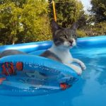 【おかしい猫】世界で一番面白い猫 笑いたくない #27