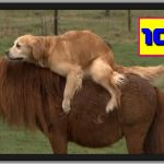 世界のおもしろ動画 TOP VIDEOS ハプニング映像集 VIDEOSPION №108 【面白い動画 動画】