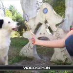 世界のおもしろ動画 ハプニング映像集 VIDEOSPION №06 【面白い動画 動画】