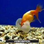 世界のおもしろ動画 ハプニング映像集 VIDEOSPION №07 【面白い動画 動画】