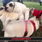 世界のおもしろ動画 ハプニング映像集 VIDEOSPION №33 【面白い動画 動画】