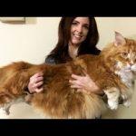 かわいい猫 – 猫おもしろ – 最も面白い猫の動画 2017 #45