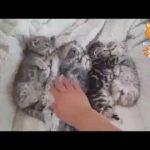 猫 おもしろ   最も面白い猫の動画 2017 #9 HD
