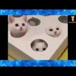 動物【面白】面白い猫 おかしい猫   かわいい猫  【やまぜんチャンネル】
