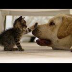 【面白い動画】 かわいい猫 – かわいい犬 – 最も面白いペットの動画 #1