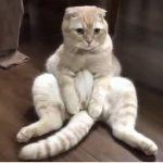 「かわいい猫」 猫 おもしろ – 最も面白い猫の動画 2017 パート18
