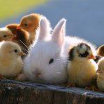 面白いことをするかわいいウサギの特集