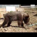 面白い動物の生態 面白い動物 動画 面白い動物の動画