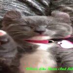 Funny Animal Videos   猫 かわいい   猫 おもしろ   最も面白い猫の動画 #67