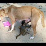 【超笑える】面白い 映像, 動物の面白い動画 Part 2