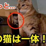 【猫】何してるの?w 可愛い猫の面白い行動【癒し】
