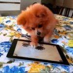 【動物 かわいい 猫】面白い犬のコンパイル2016 面白い動画 1080年恐れ HD