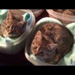 猫 かわいい – 猫 おもしろ – 最も面白い猫の動画 2017 #13