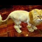 猫 かわいい – 猫 おもしろ – 最も面白い猫の動画 2017 #33