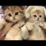 非常にかわいい子猫 – 最も面白い猫の動画 2017 #43