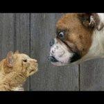 かわいい猫 – 猫は犬を愛する – 最も面白い猫の動画 2017 #47