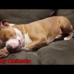おかしい動物 – おかしい犬の動画 – 面白い犬のいびきの編集2016null