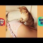 【超笑える】猫かわいい • 猫おもしろ • 最も面白い猫の動画 集