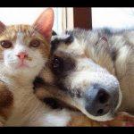【Twitterで話題】面白い 動画 日本,  最高おもしろ犬猫 の動画 2017 www P2