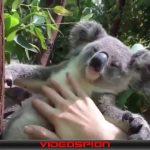 世界のおもしろ動画 ハプニング映像集 VIDEOSPION №58 【面白い動画 動画】